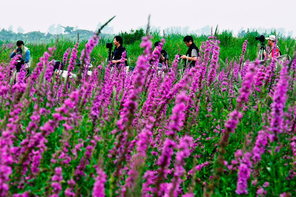 Bird watchers and tourists at the Cixi wetlands in China, which have become a national park that attracts thousands every year. Photo: You Ji/World Bank